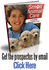 Anima care course brochure